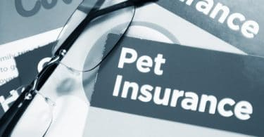 Pet Insurance – It Really Exists!